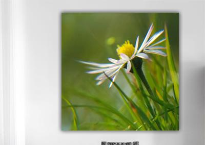 Fotografie Natur, geringe Tiefenschärfe © Marie-Theres Kock